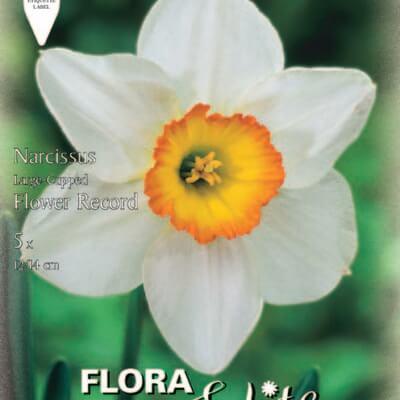 Νάρκισσος Flower record