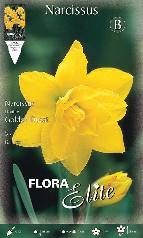 Νάρκισσος Golden ducat