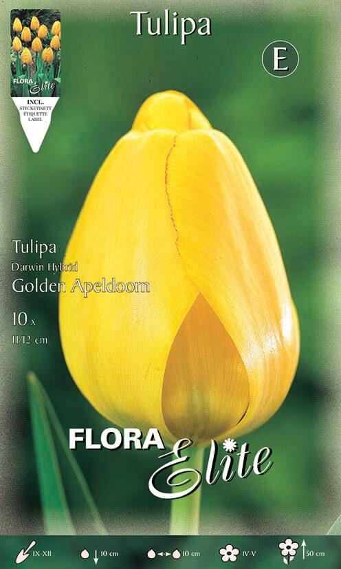 Tulipa-Golden-Apeldoorn