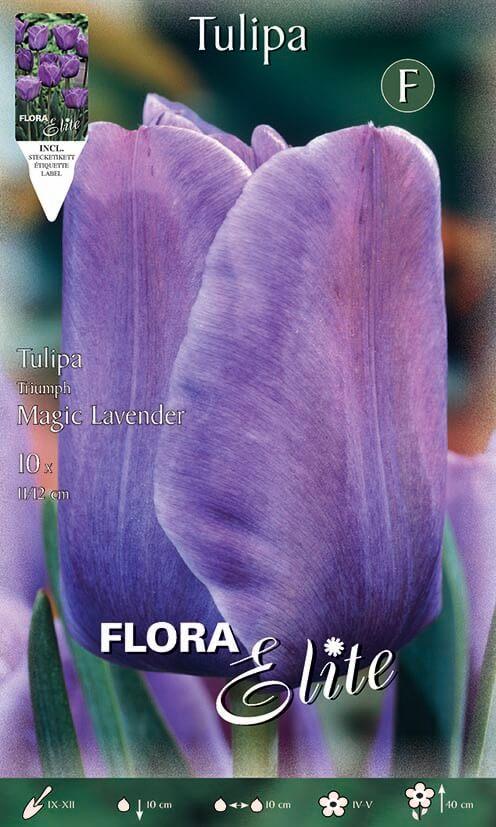 Τουλίπα Magic lavender