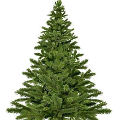 Φυσικό Χριστουγεννιάτικο δέντρο έλατο ύψους 2,50 έως 3,50 m