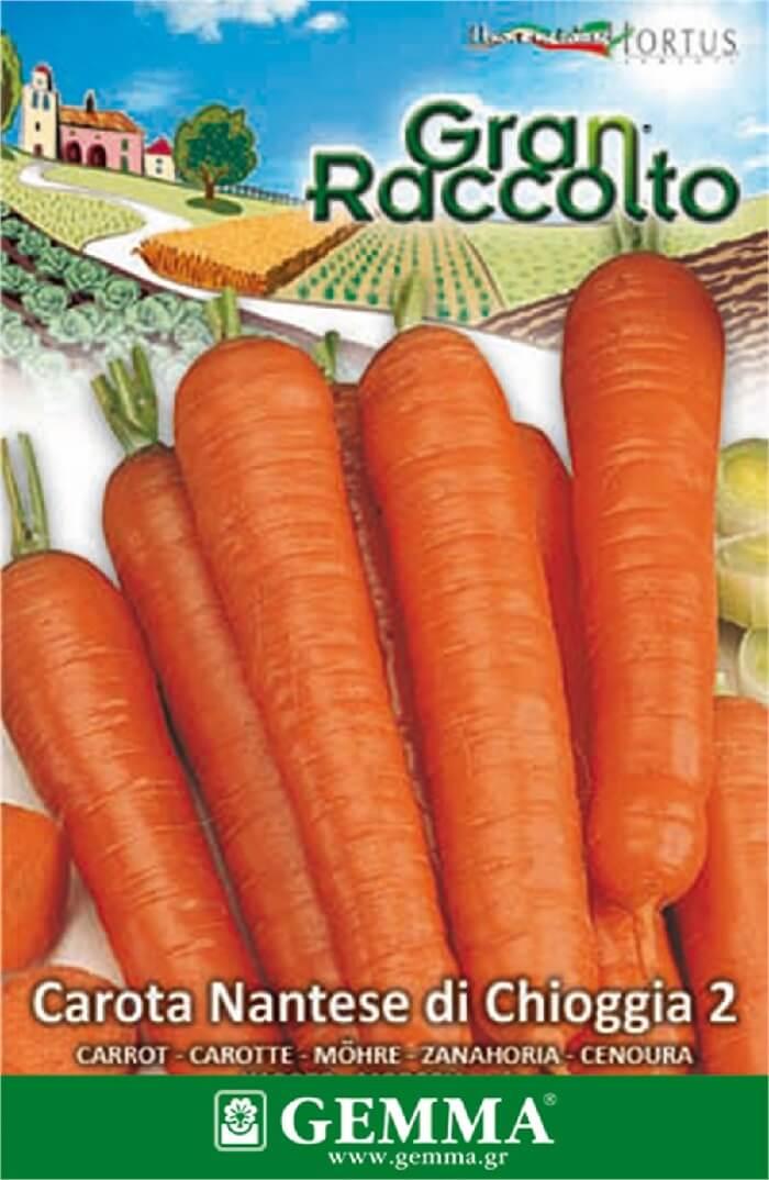 καρότο μηκους 16
