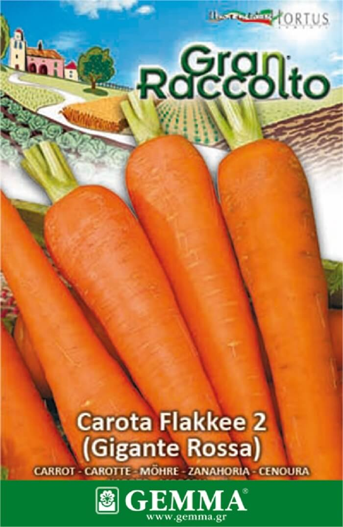 Καρότο γίγας Gemma raccolto 20 gr