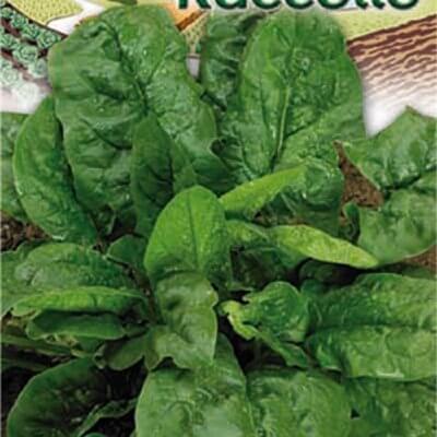 Σπανάκι πλατύφυλλο Gemma raccolto φάκελος 40 γρ